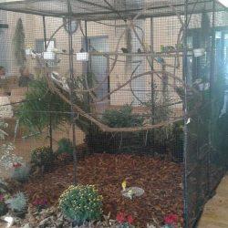 Perruches calopsittes et ondulées se partage cette grande volière